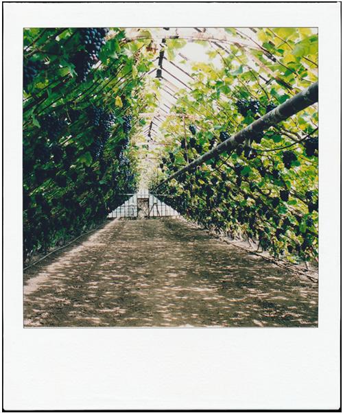 Historische sfeer in druiventuin Sonnehoeck