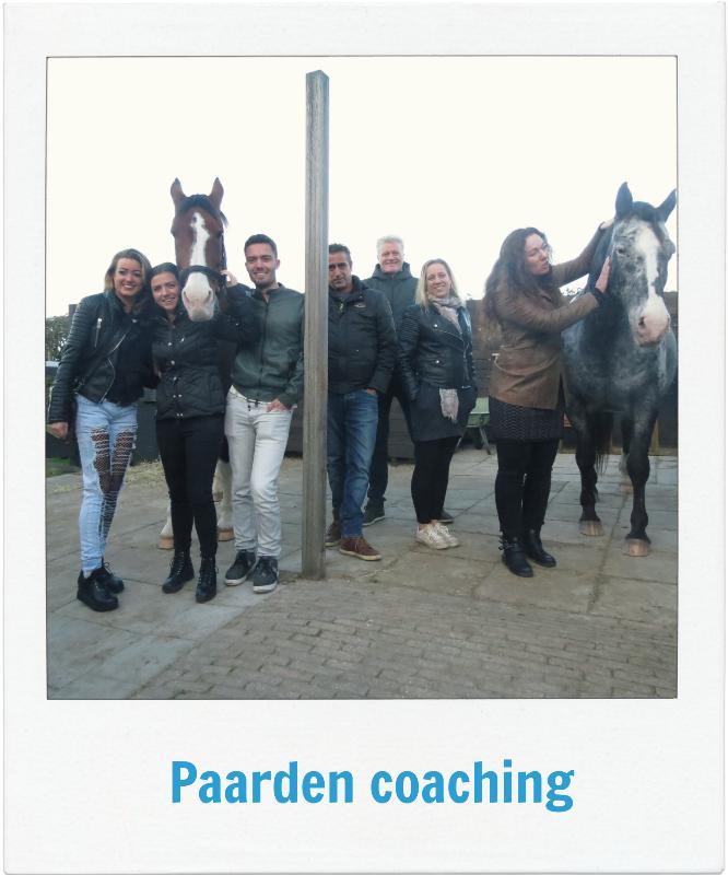 Paarden coaching sessie